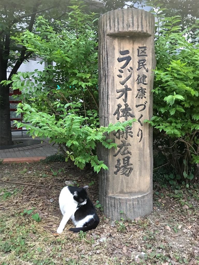 f:id:TokuheiKumagai:20190602221702j:image