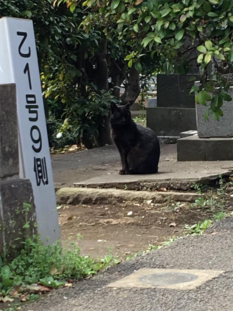 f:id:TokuheiKumagai:20190604223549j:image