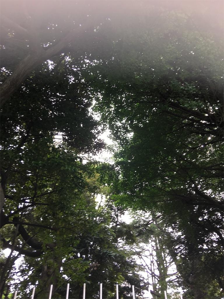 f:id:TokuheiKumagai:20190605214231j:image
