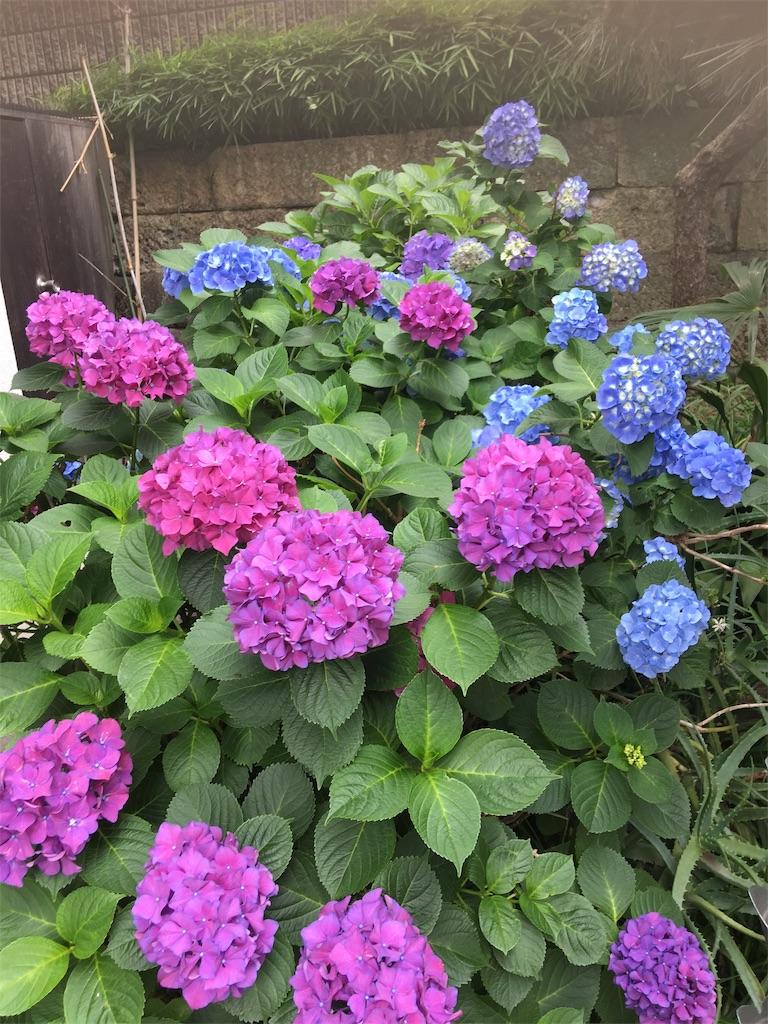 f:id:TokuheiKumagai:20190605214304j:image