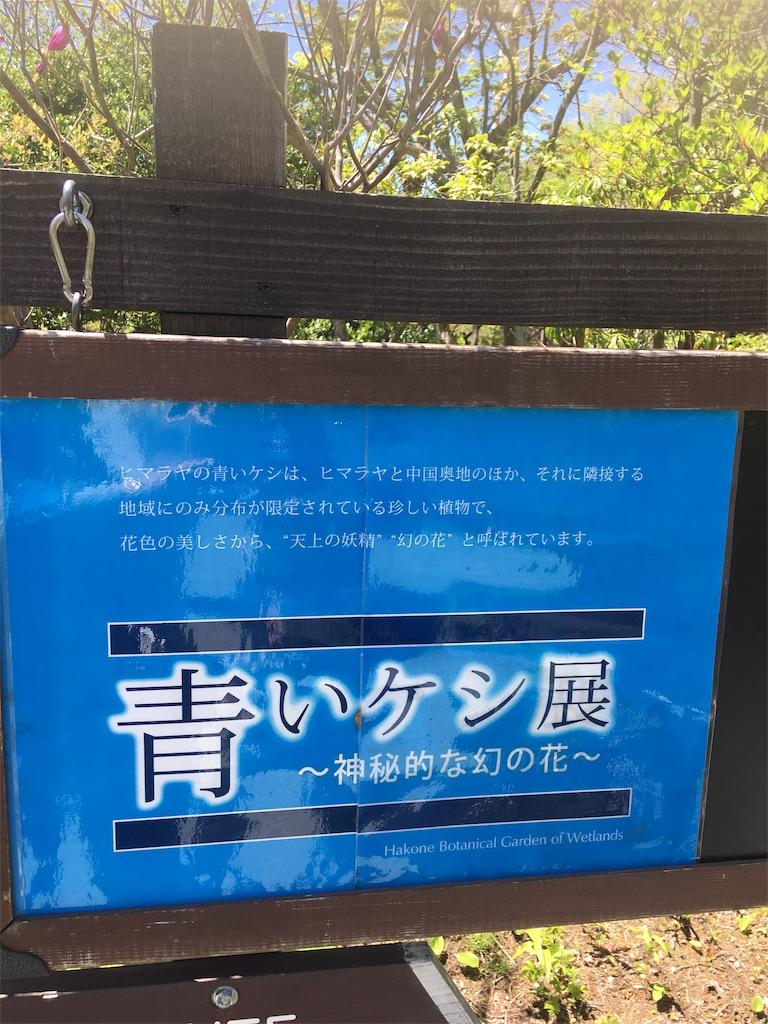 f:id:TokuheiKumagai:20190607002541j:image