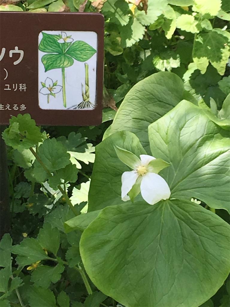 f:id:TokuheiKumagai:20190607002554j:image