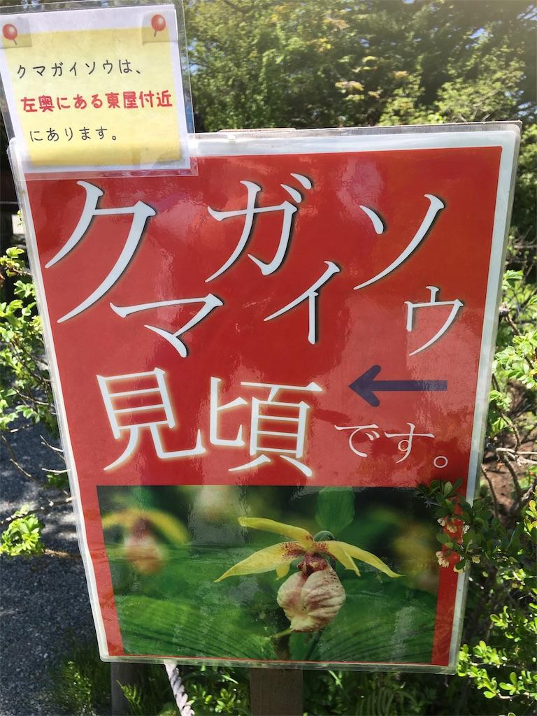 f:id:TokuheiKumagai:20190607002558j:image