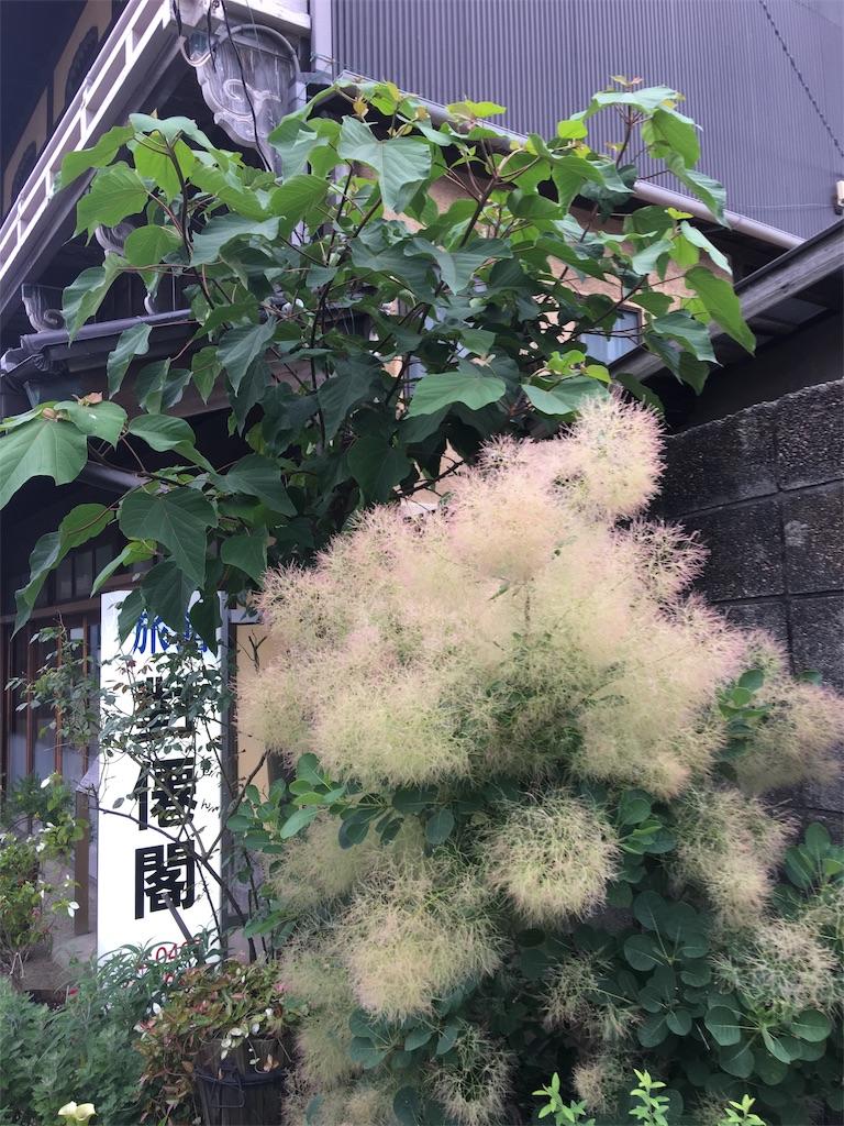 f:id:TokuheiKumagai:20190612221748j:image