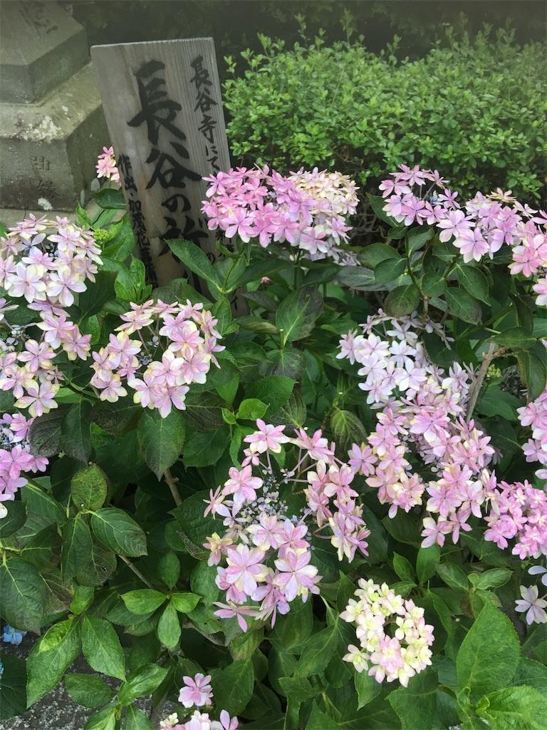 f:id:TokuheiKumagai:20190612222145j:image