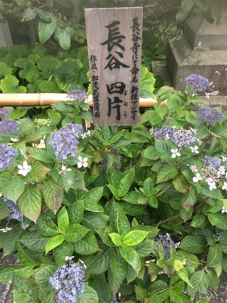 f:id:TokuheiKumagai:20190612222202j:image