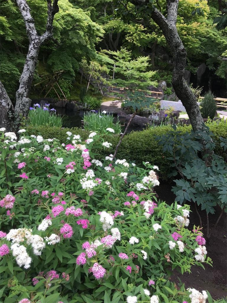 f:id:TokuheiKumagai:20190612222224j:image