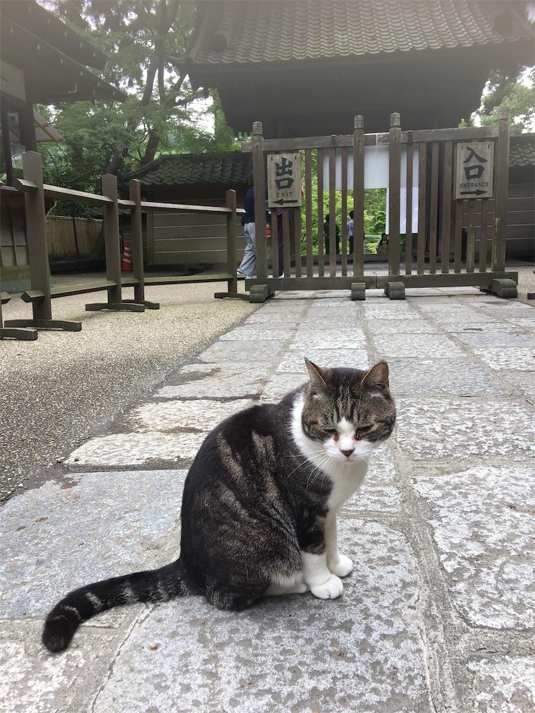 f:id:TokuheiKumagai:20190612222306j:image