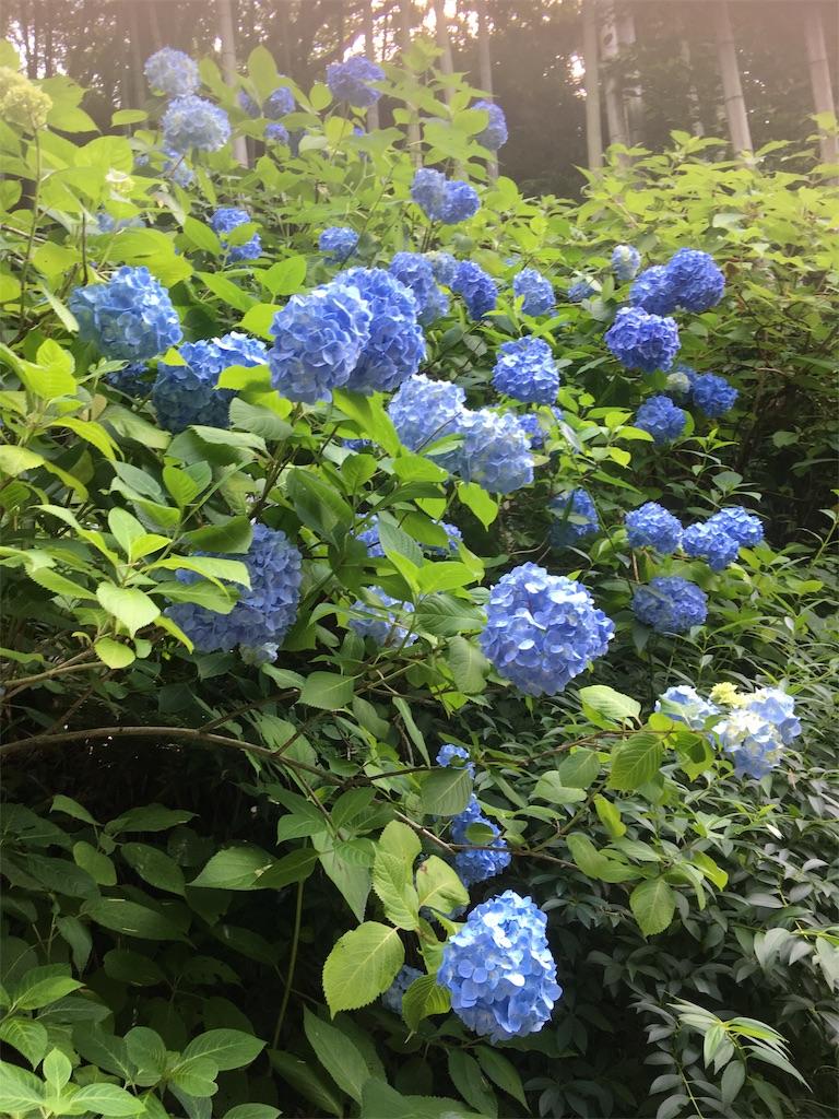 f:id:TokuheiKumagai:20190612222455j:image