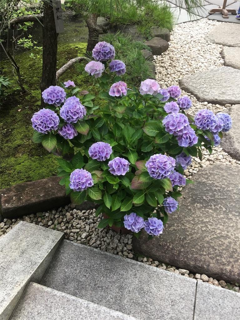 f:id:TokuheiKumagai:20190612222618j:image