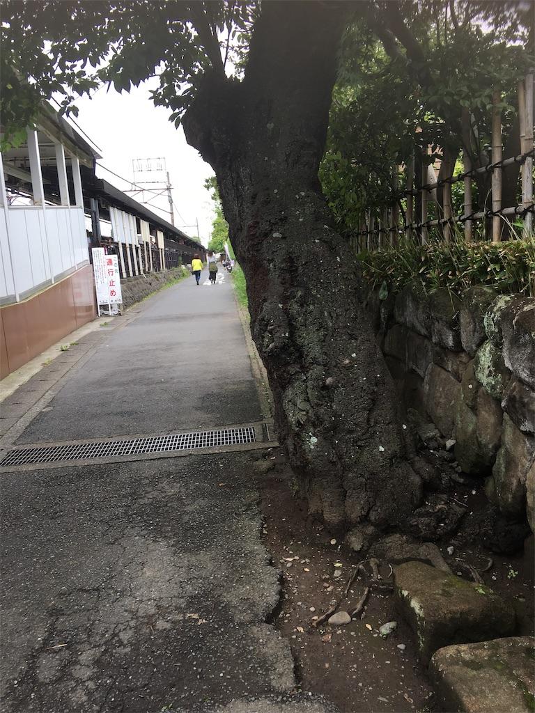 f:id:TokuheiKumagai:20190612222732j:image