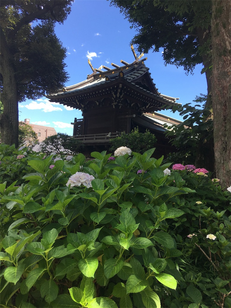 f:id:TokuheiKumagai:20190617001526j:image