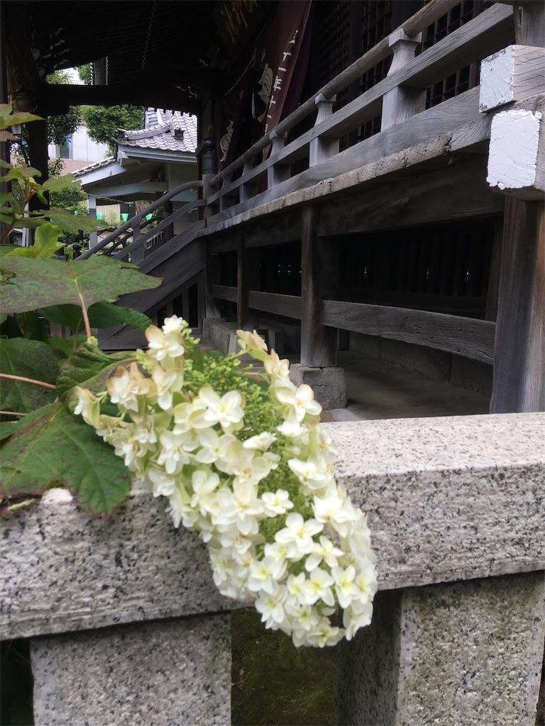 f:id:TokuheiKumagai:20190617002459j:image