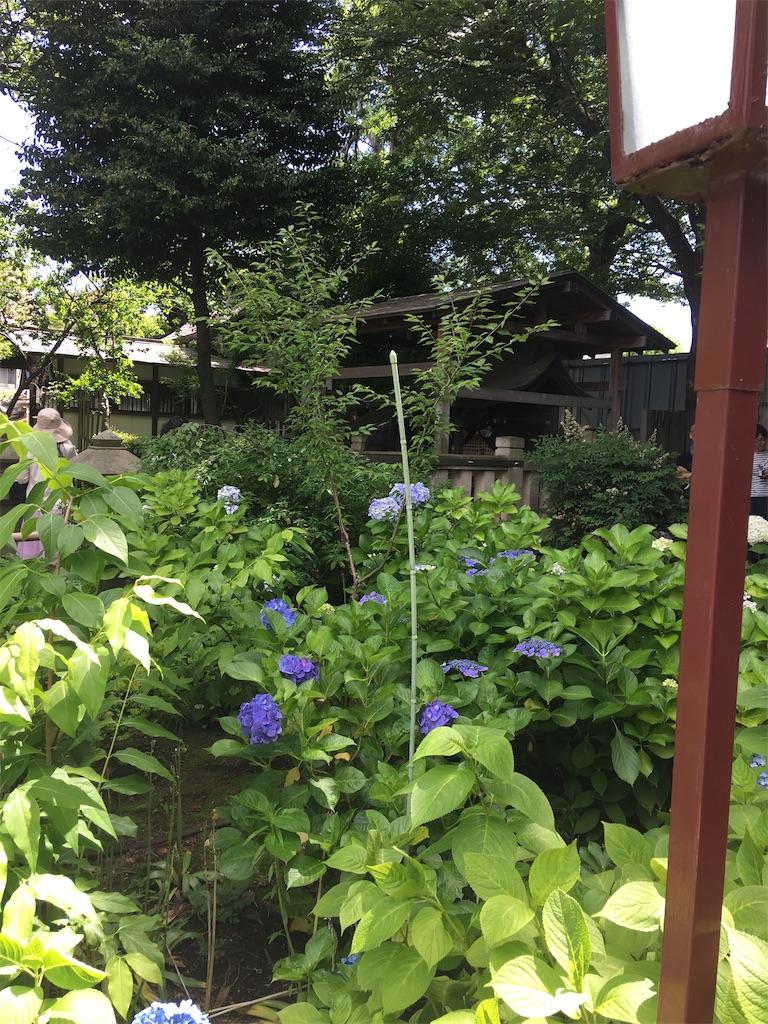 f:id:TokuheiKumagai:20190617002514j:image