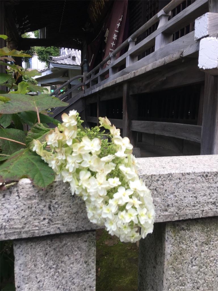 f:id:TokuheiKumagai:20190617002555j:image
