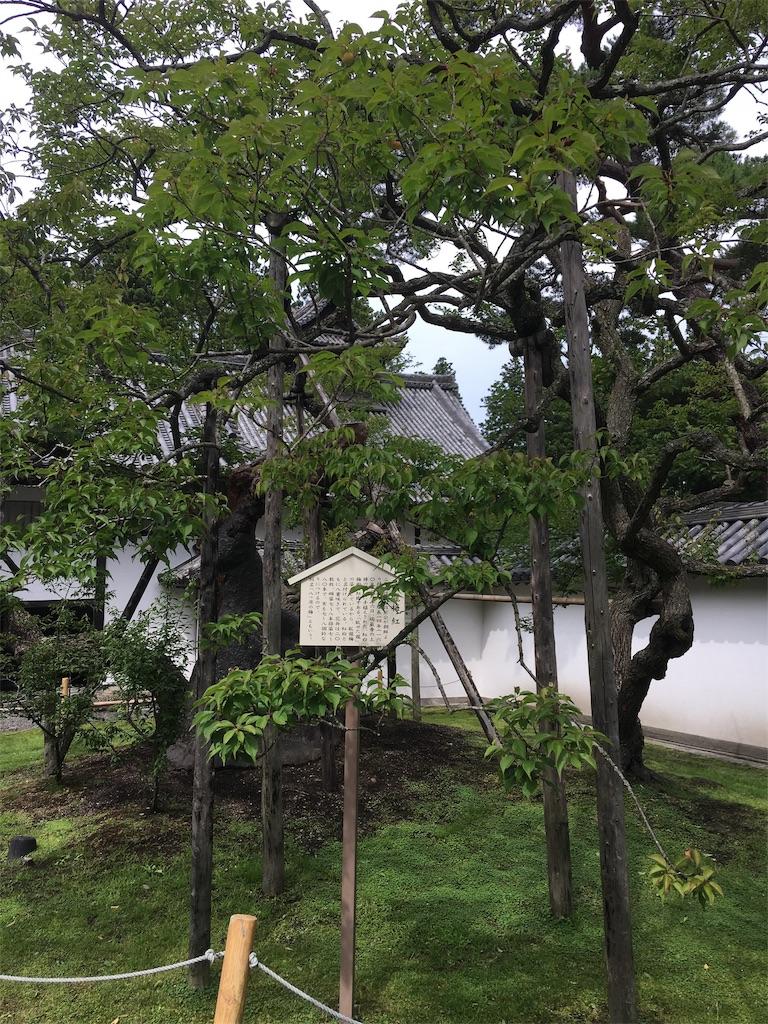 f:id:TokuheiKumagai:20190705235438j:image
