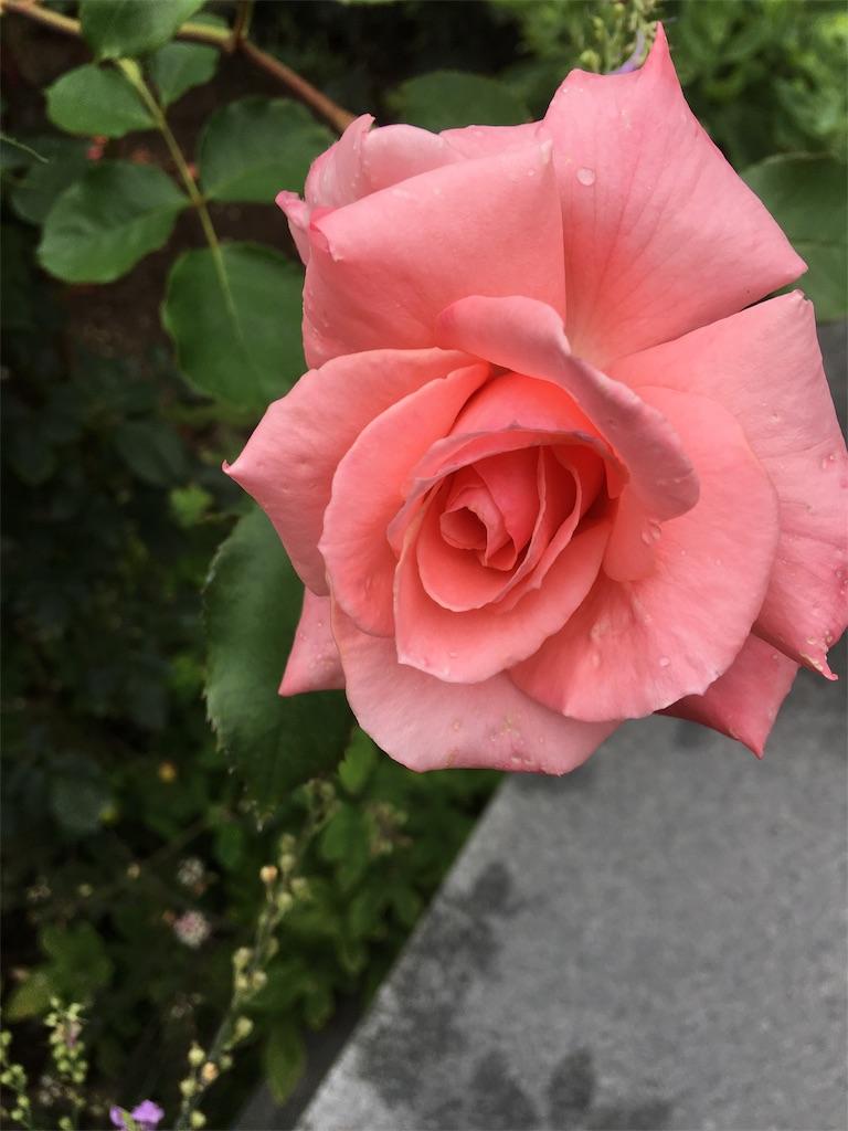 f:id:TokuheiKumagai:20190705235621j:image