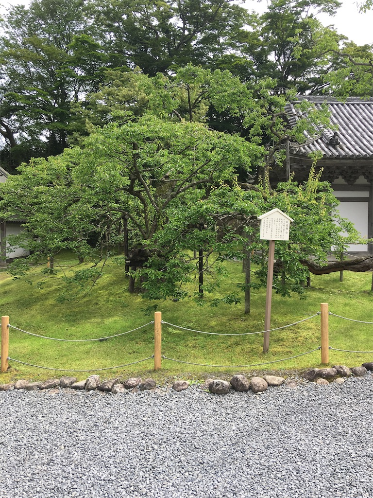 f:id:TokuheiKumagai:20190706000442j:image