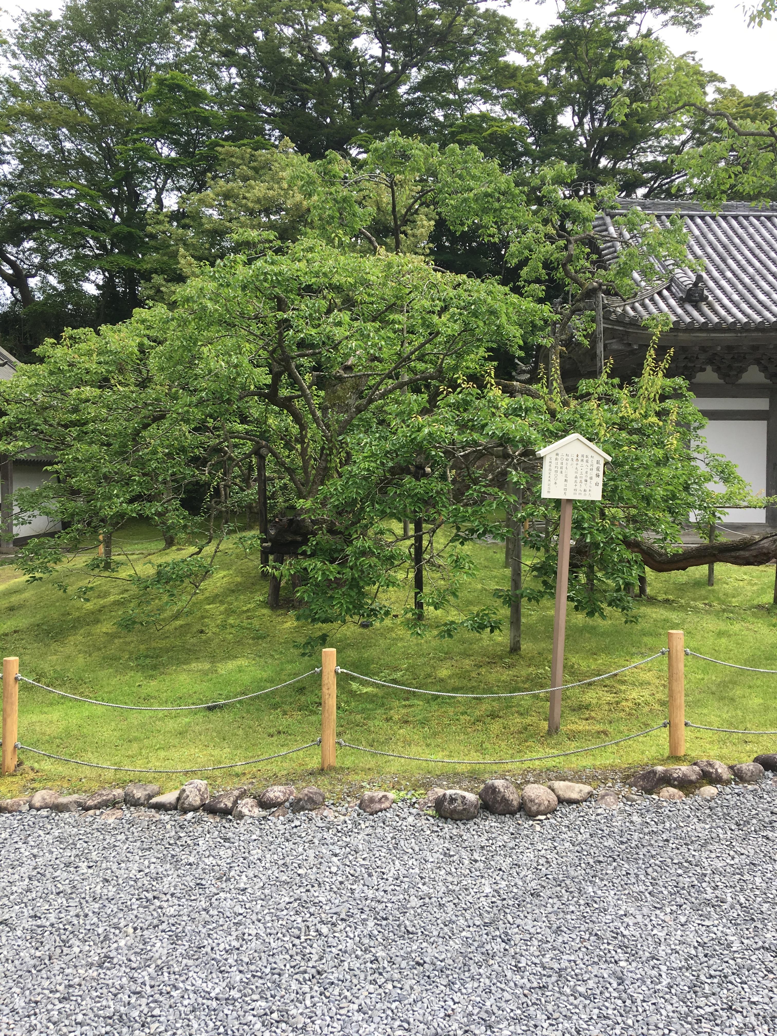 f:id:TokuheiKumagai:20190706000504j:image