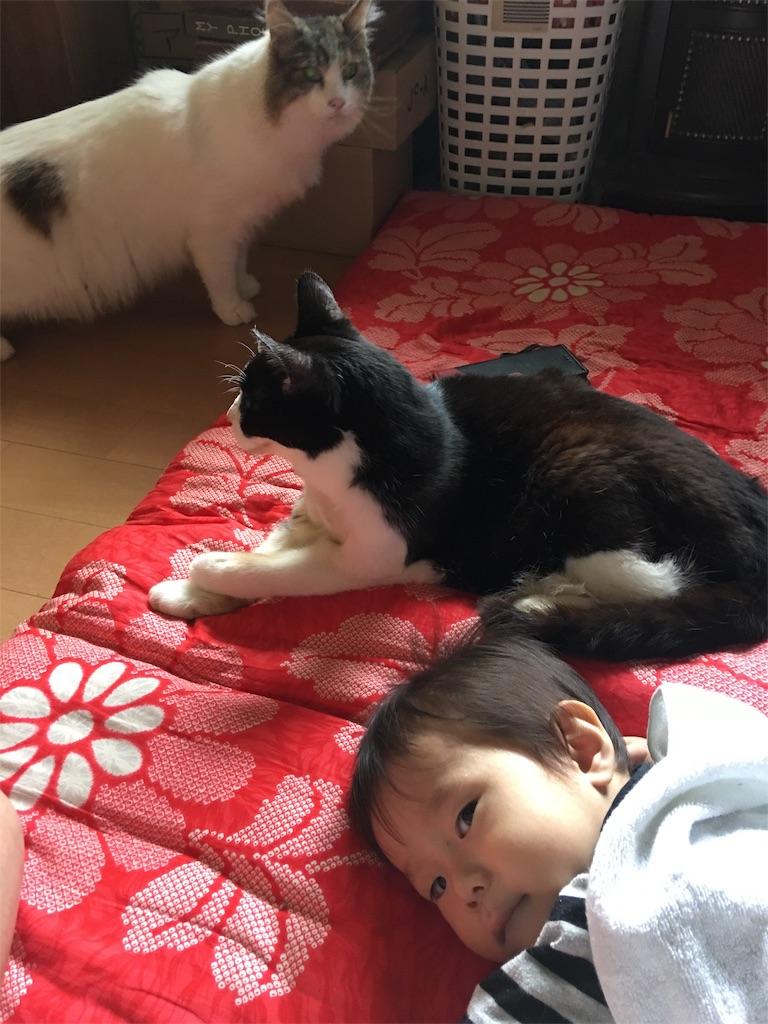 f:id:TokuheiKumagai:20190814222103j:image