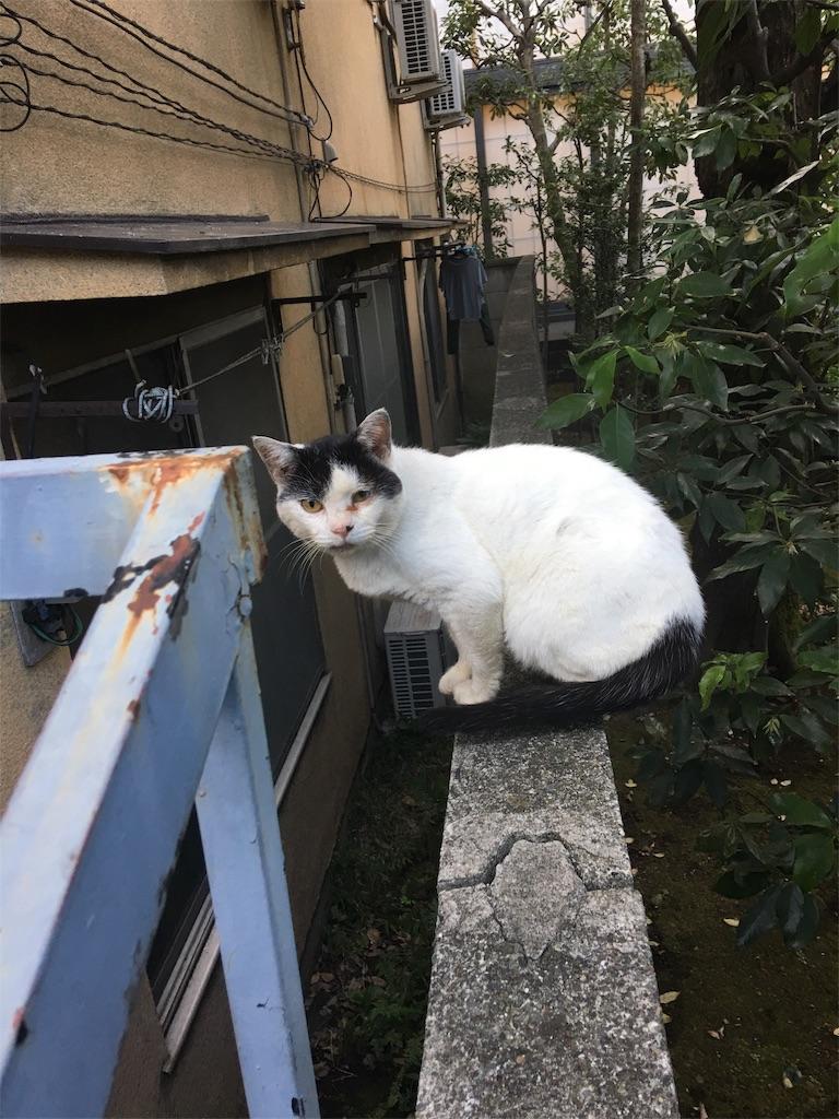 f:id:TokuheiKumagai:20190912201800j:image