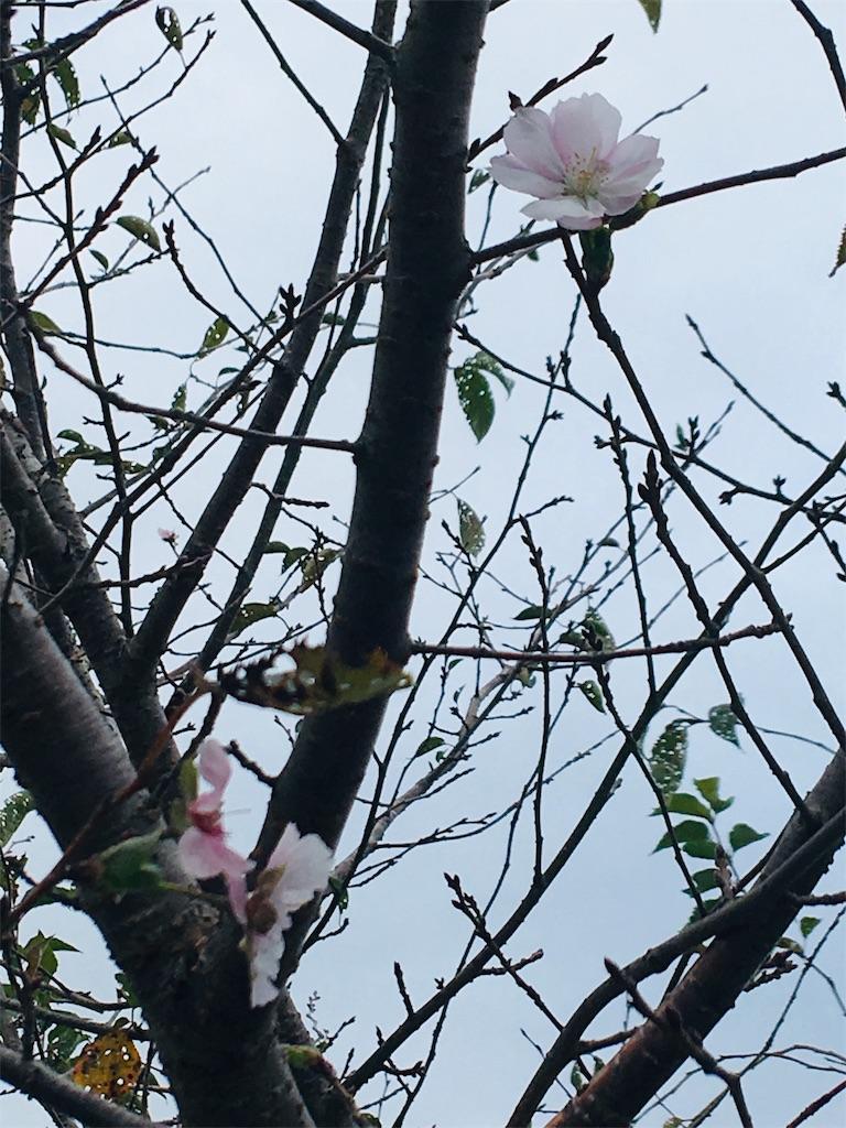 f:id:TokuheiKumagai:20190924203603j:image