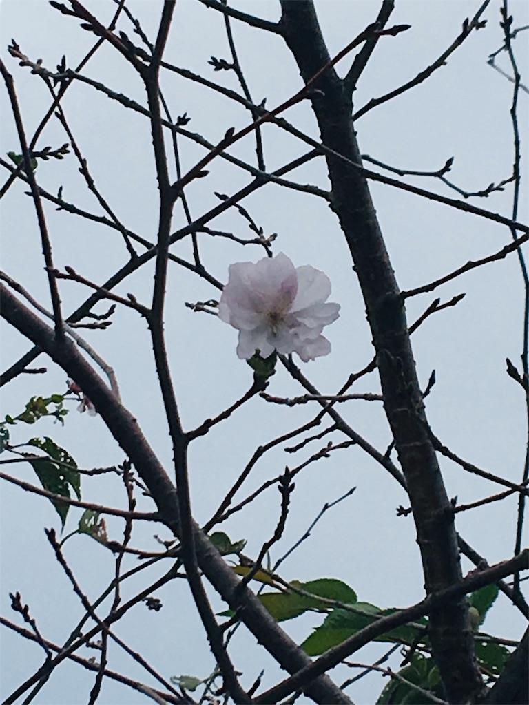 f:id:TokuheiKumagai:20190924203610j:image