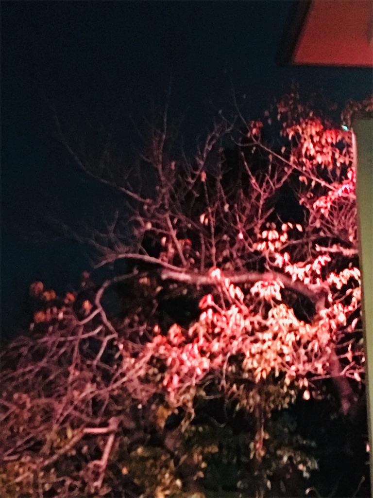 f:id:TokuheiKumagai:20191214231857j:image