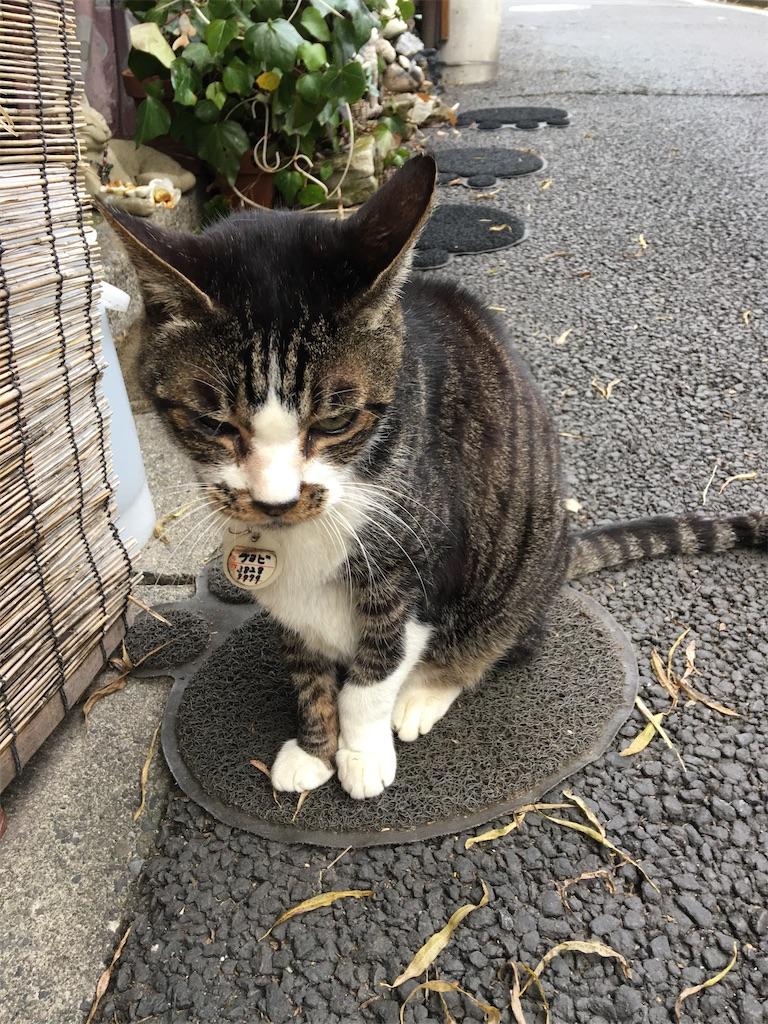 f:id:TokuheiKumagai:20200117215145j:image