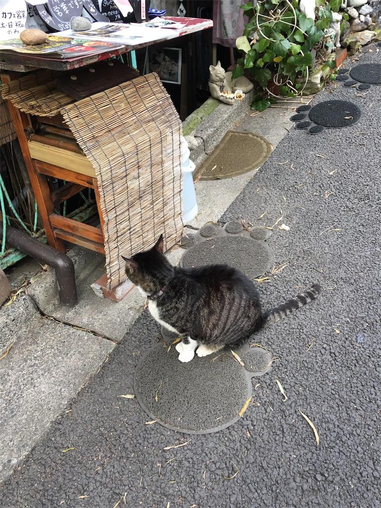 f:id:TokuheiKumagai:20200117215204j:image