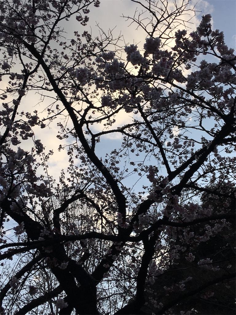 f:id:TokuheiKumagai:20200206233512j:image