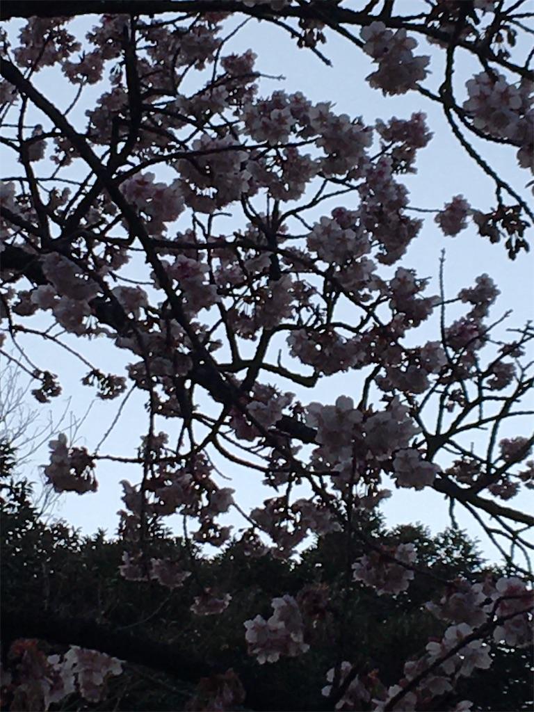 f:id:TokuheiKumagai:20200206233525j:image