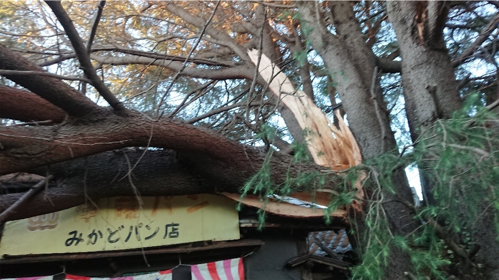 f:id:TokuheiKumagai:20200210223626j:image
