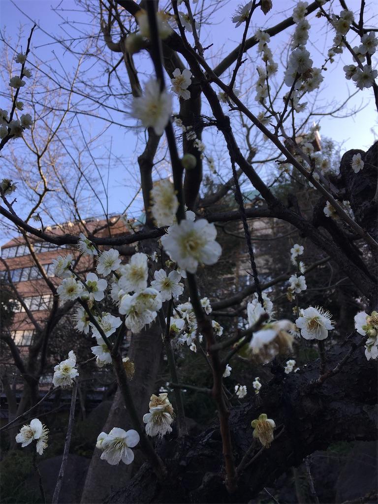 f:id:TokuheiKumagai:20200212230504j:image