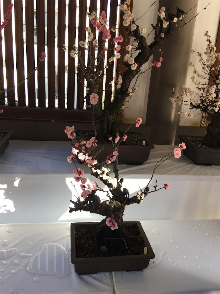 f:id:TokuheiKumagai:20200212231040j:image