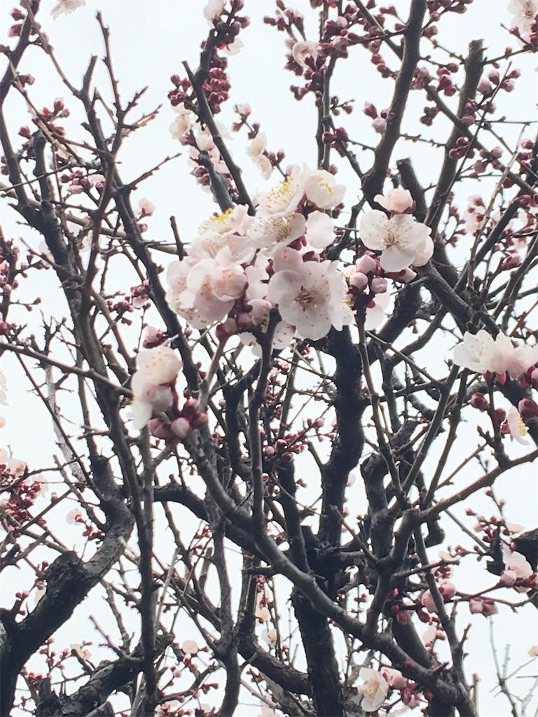 f:id:TokuheiKumagai:20200215220831j:image