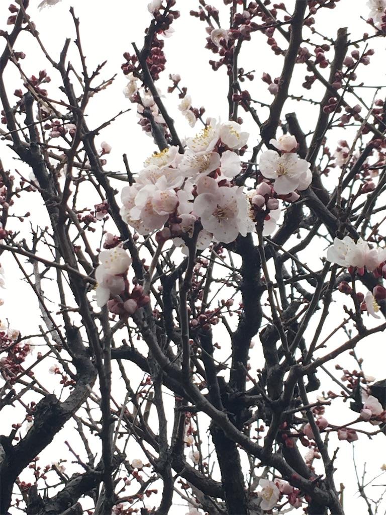 f:id:TokuheiKumagai:20200215220835j:image