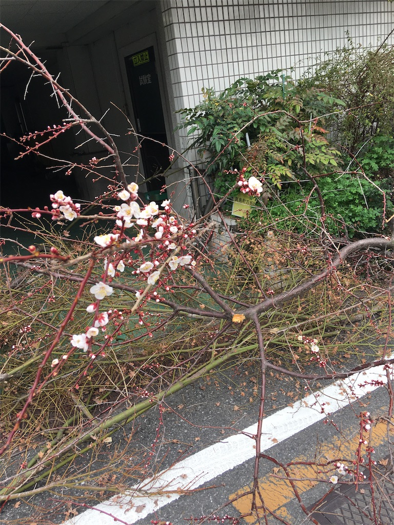 f:id:TokuheiKumagai:20200215220839j:image