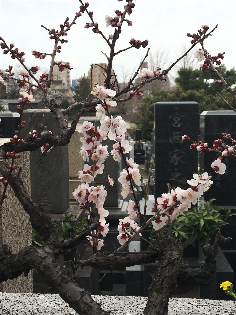 f:id:TokuheiKumagai:20200215220904j:image