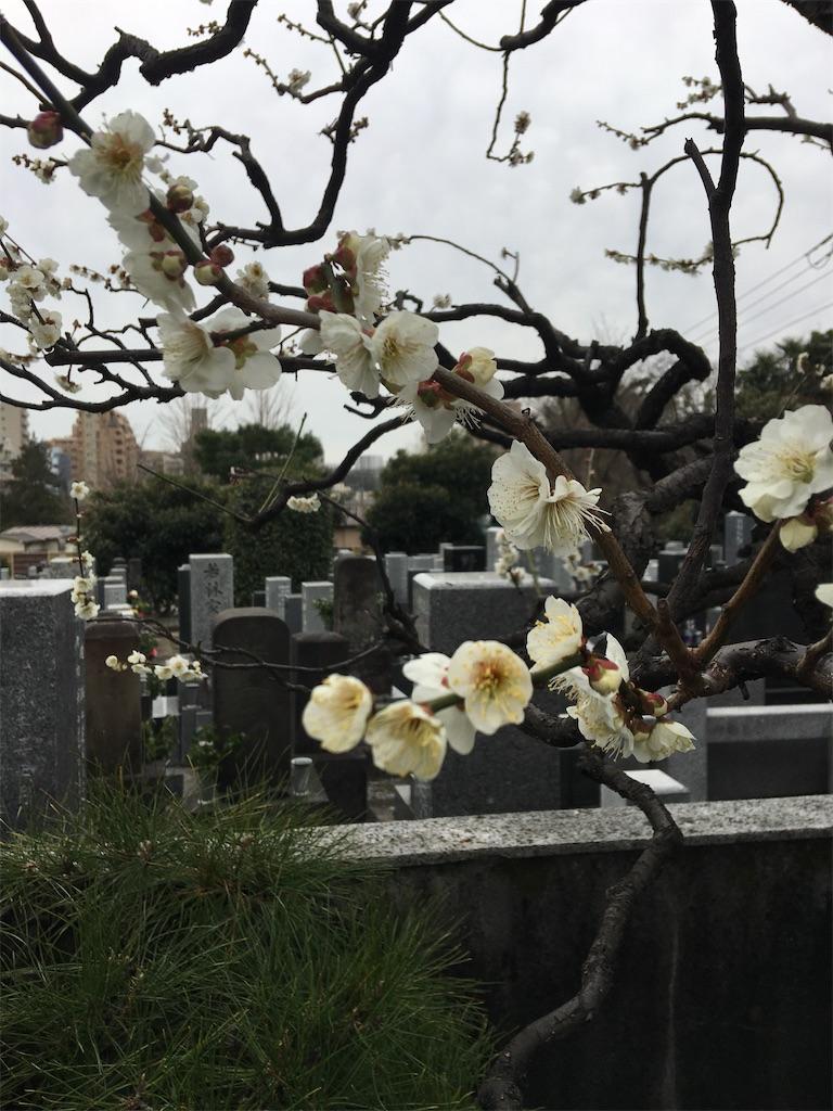 f:id:TokuheiKumagai:20200215220906j:image
