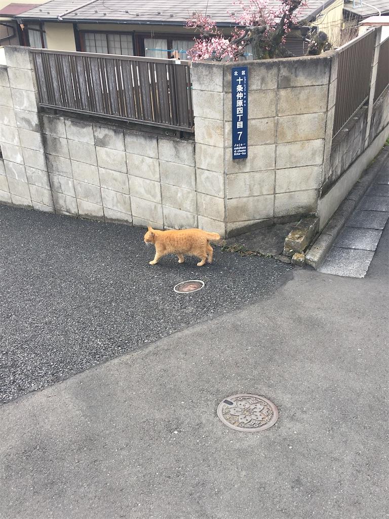 f:id:TokuheiKumagai:20200217221331j:image