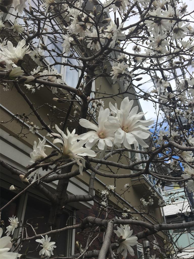 f:id:TokuheiKumagai:20200316181118j:image
