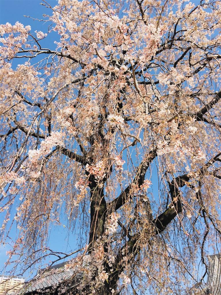 f:id:TokuheiKumagai:20200321193335j:image