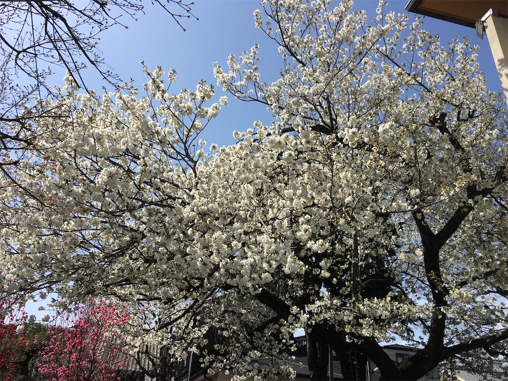 f:id:TokuheiKumagai:20200321193338j:image