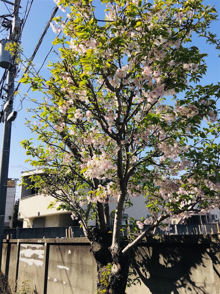 f:id:TokuheiKumagai:20200321193423j:image