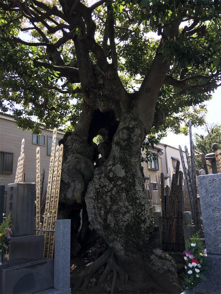 f:id:TokuheiKumagai:20200321193426j:image