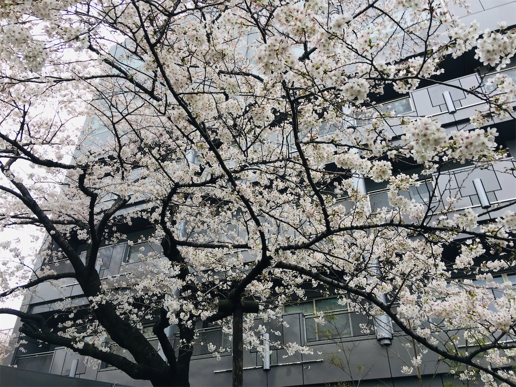 f:id:TokuheiKumagai:20200323202455j:image