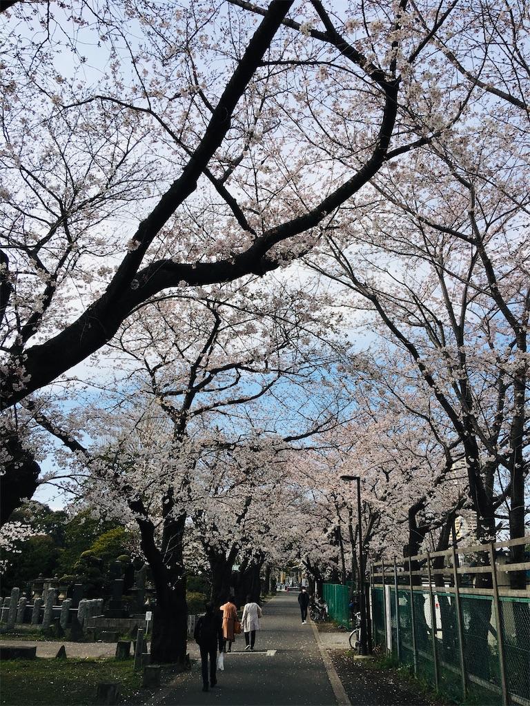 f:id:TokuheiKumagai:20200323202531j:image