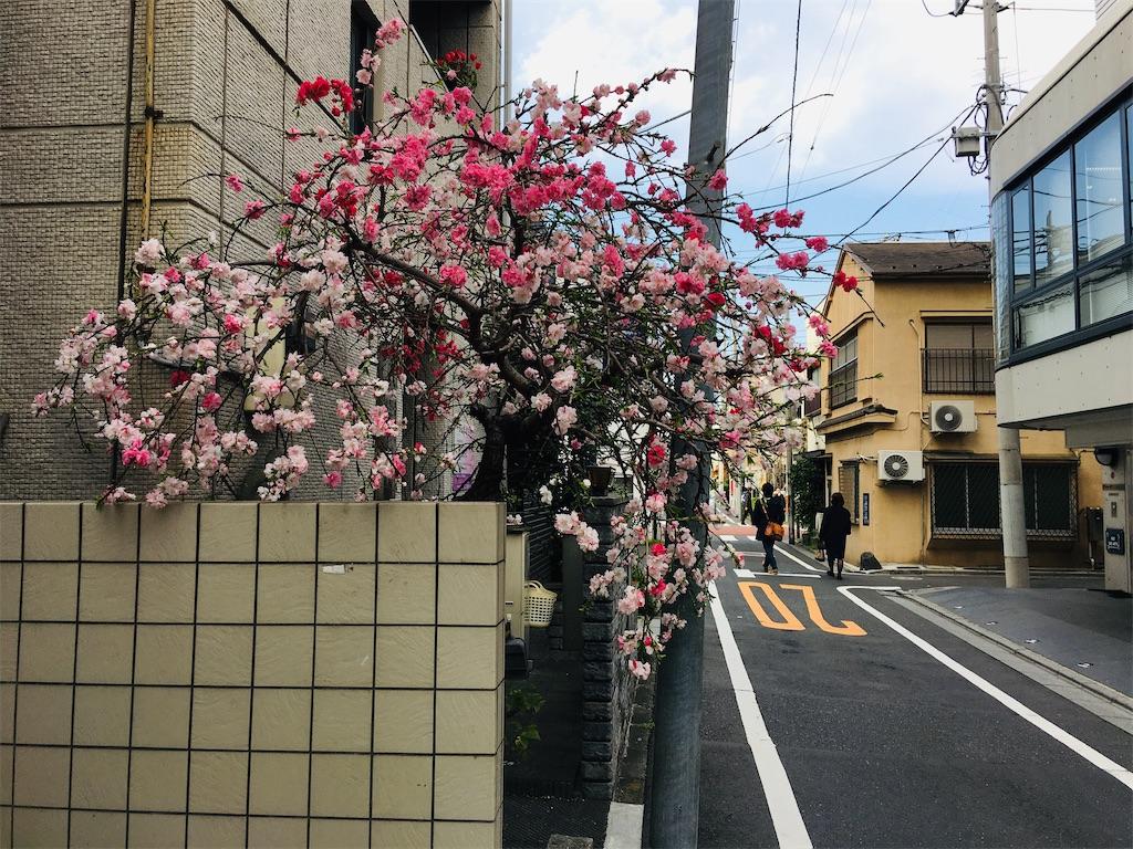 f:id:TokuheiKumagai:20200323202559j:image