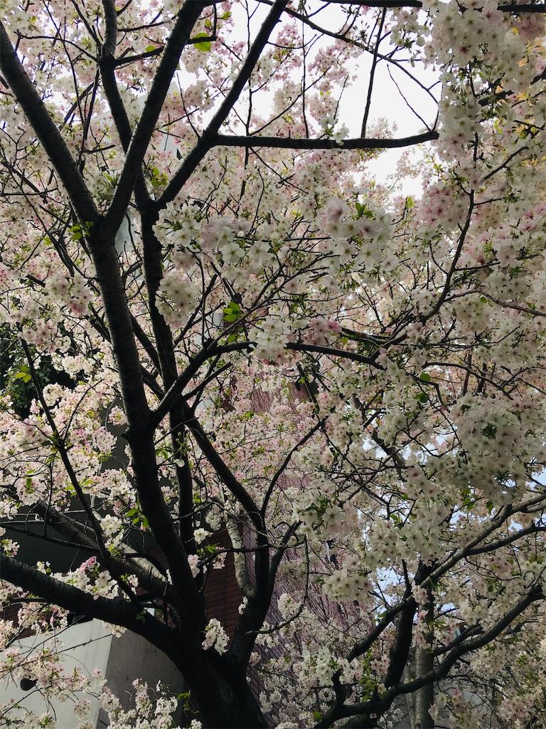 f:id:TokuheiKumagai:20200323202606j:image